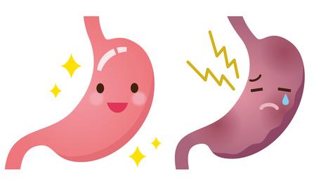 健康な胃と弱った胃
